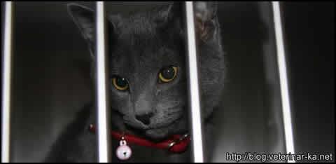 Uhajanje urina pri kastriranem mačku